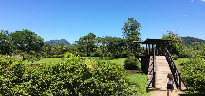 Manu Fernandes - Jardim Botânico