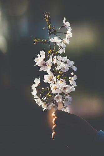 Manu Fernandes - árvore de cerejeira